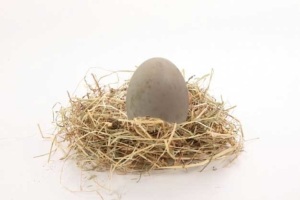 Huevos de Pato, el más sabroso.