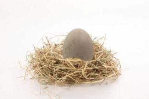 Huevo de pato en nido