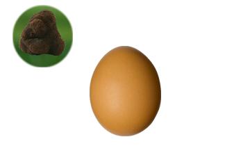 Huevo campero trufado con trufa negra