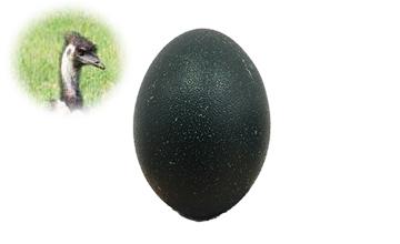Huevo de emu