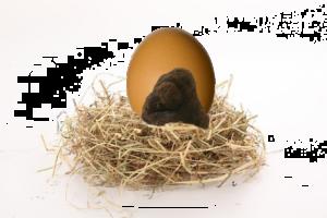 huevo-trufado-sobre-nido-paja