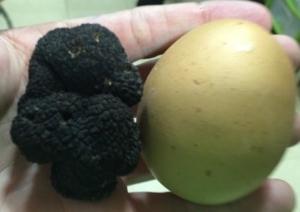 Productos Maridaje con huevos
